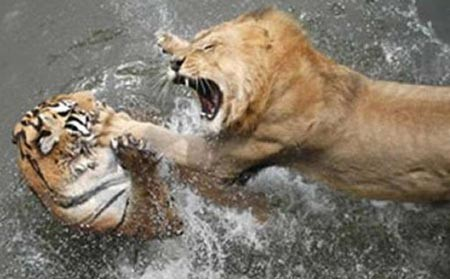 Vahşi doğanın acımasızlığı! 10