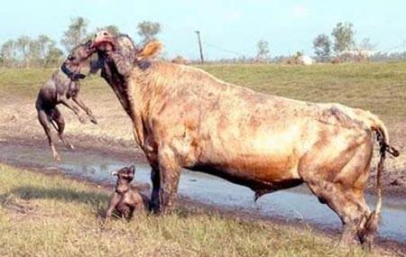 Vahşi doğanın acımasızlığı! 14