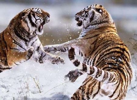 Vahşi doğanın acımasızlığı! 8