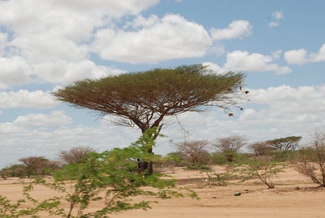 Alışılmış bir başlık; Konyadan Kenyaya 20