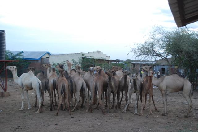 Alışılmış bir başlık; Konyadan Kenyaya 4