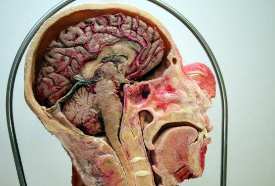 Konyada kadavra ile anatomi dersi 3