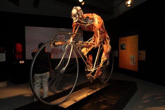 Konyada kadavra ile anatomi dersi 7
