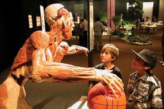 Konyada kadavra ile anatomi dersi 8