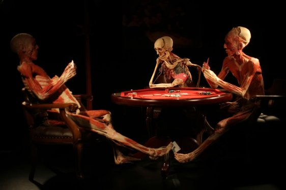 Konyada kadavra ile anatomi dersi 9