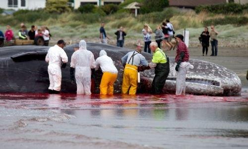 45 tonluk dev kıyıya vurdu 10