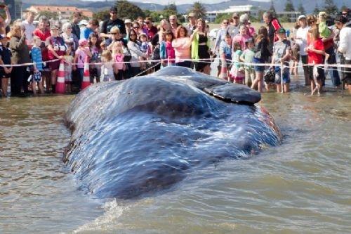 45 tonluk dev kıyıya vurdu 4