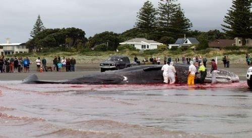 45 tonluk dev kıyıya vurdu 8