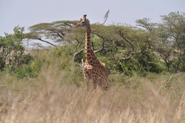 Gülün objektifinden Afrika safarisi 1
