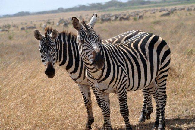 Gülün objektifinden Afrika safarisi 2