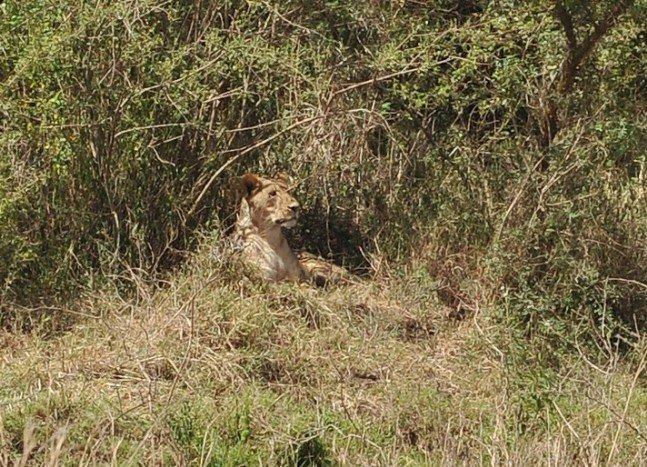 Gülün objektifinden Afrika safarisi 3