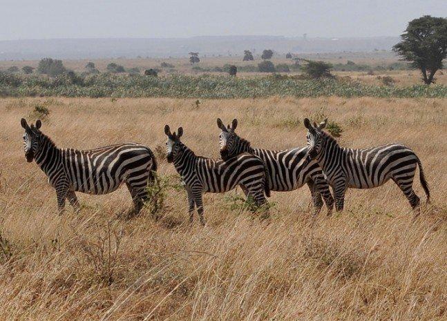 Gülün objektifinden Afrika safarisi 4