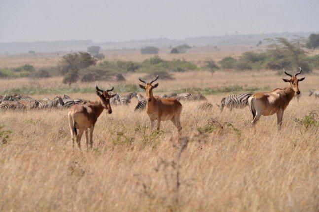 Gülün objektifinden Afrika safarisi 5