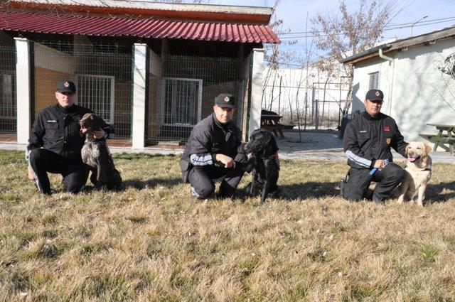 Bu köpekler suçlulara göz açtırmıyor 12