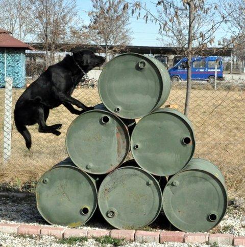 Bu köpekler suçlulara göz açtırmıyor 2