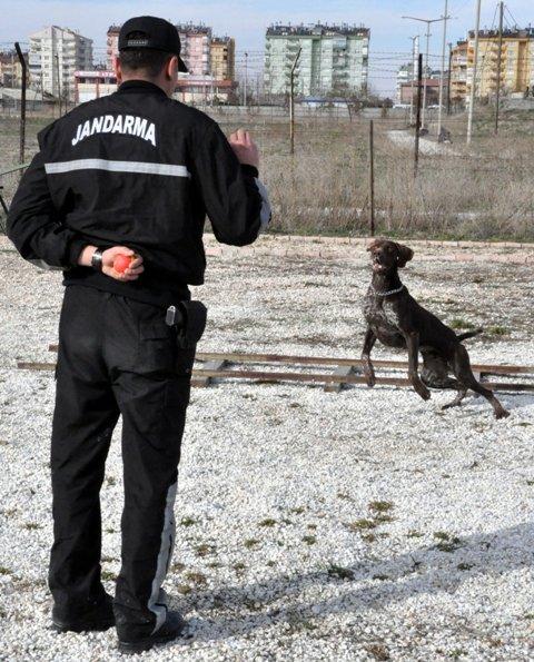 Bu köpekler suçlulara göz açtırmıyor 3