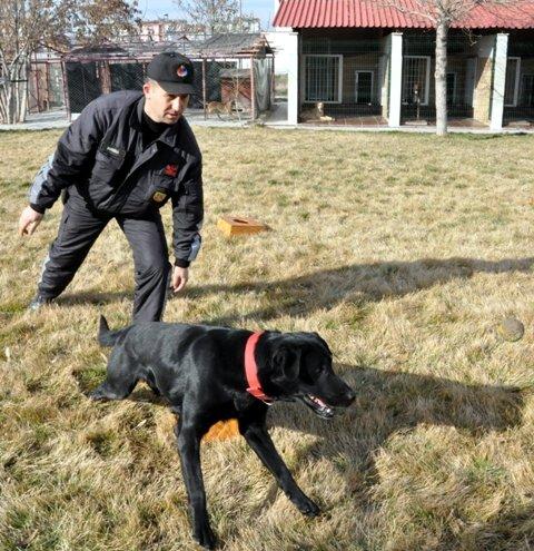 Bu köpekler suçlulara göz açtırmıyor 7