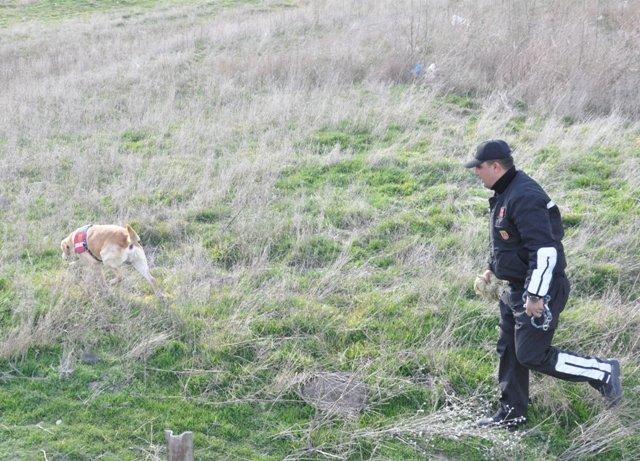 Bu köpekler suçlulara göz açtırmıyor 9