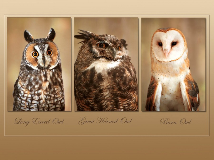 Hayvanlar alemi 4