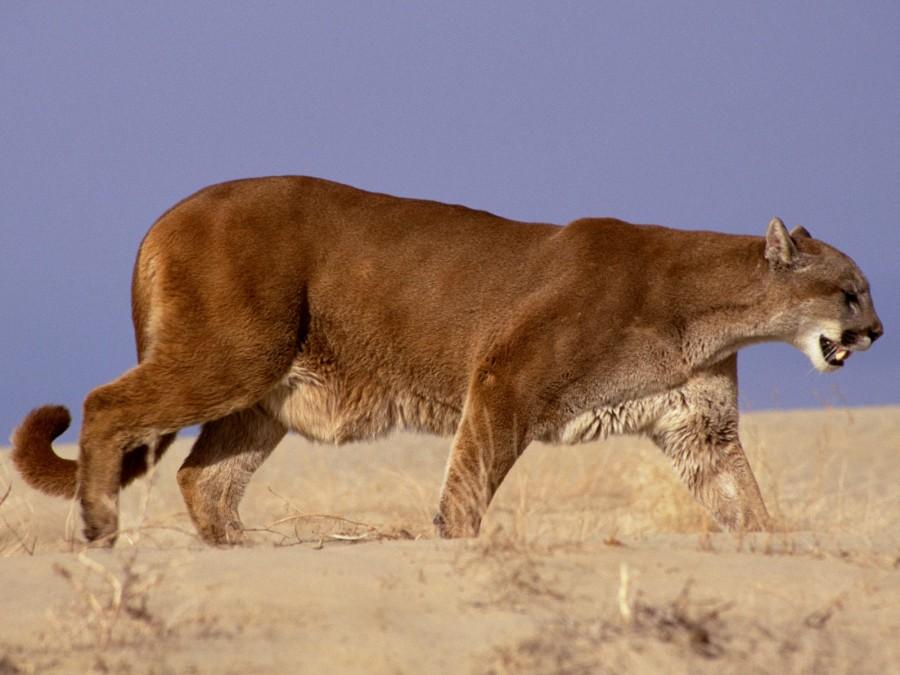 Hayvanlar alemi 6