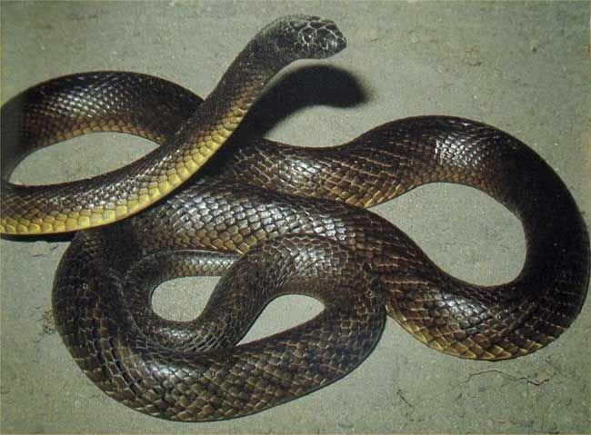 Dünyanın En Zehirli 7 Hayvanı 5