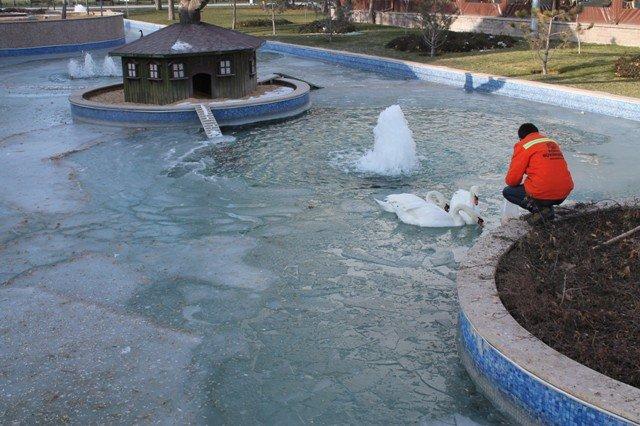 konyada havuzlar buz tuttu 3
