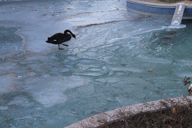 konyada havuzlar buz tuttu 7