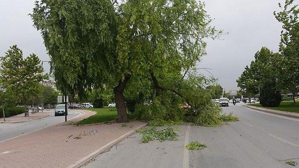 Şiddetli fırtına korkuttu 8