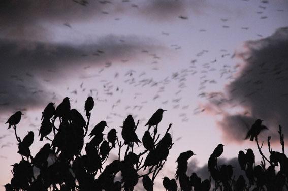 Kuşların muhteşem dansı 1