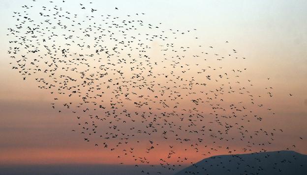 Kuşların muhteşem dansı 10