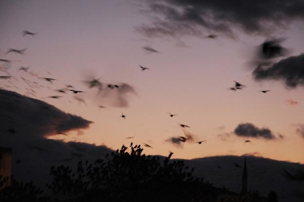 Kuşların muhteşem dansı 11