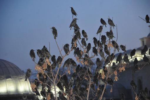 Kuşların muhteşem dansı 9