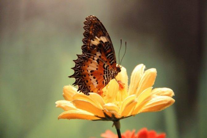 Konya Tropikal Kelebek Bahçesi Ziyaretçi Kabulüne Başlıyor 12