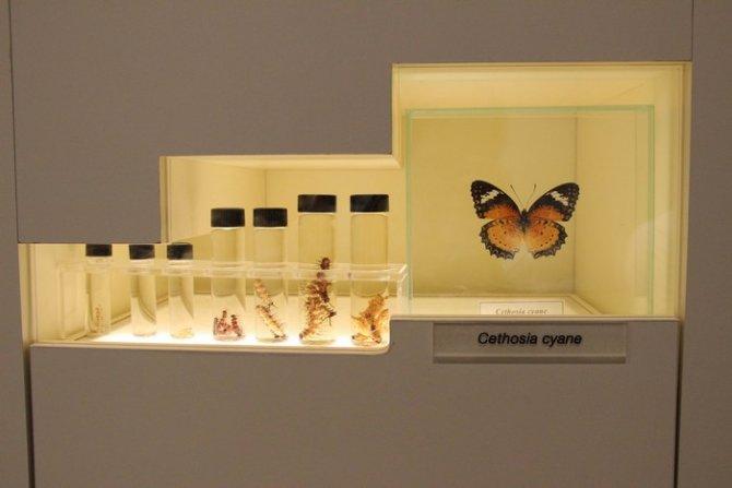Konya Tropikal Kelebek Bahçesi Ziyaretçi Kabulüne Başlıyor 13