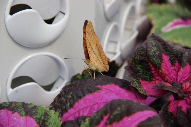 Konya Tropikal Kelebek Bahçesi Ziyaretçi Kabulüne Başlıyor 7