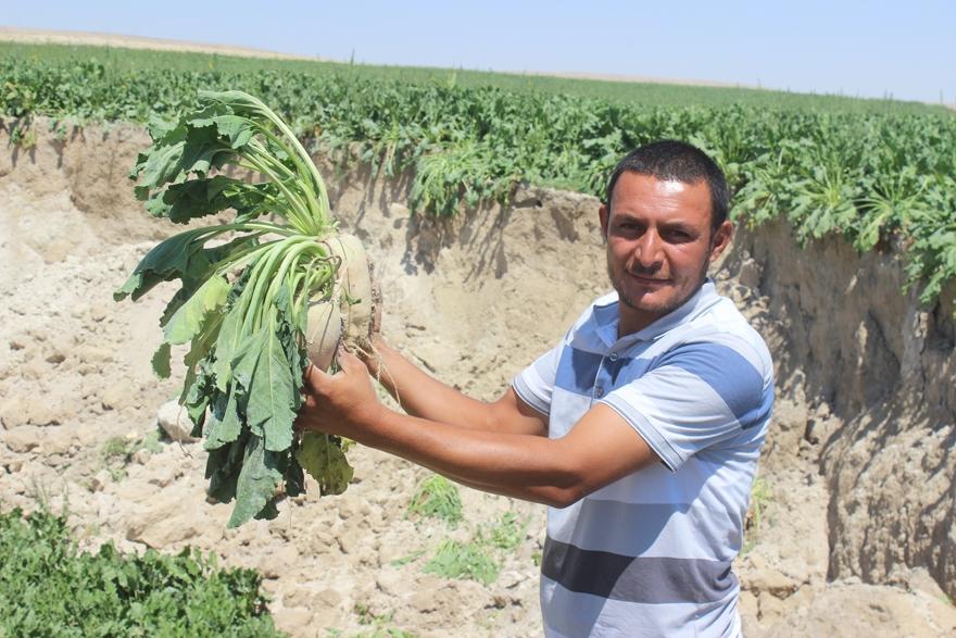Konya'da yeni obruk oluştu 2