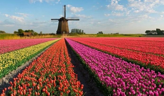 Hollanda'nın Türk ekonomisindeki yeri 4