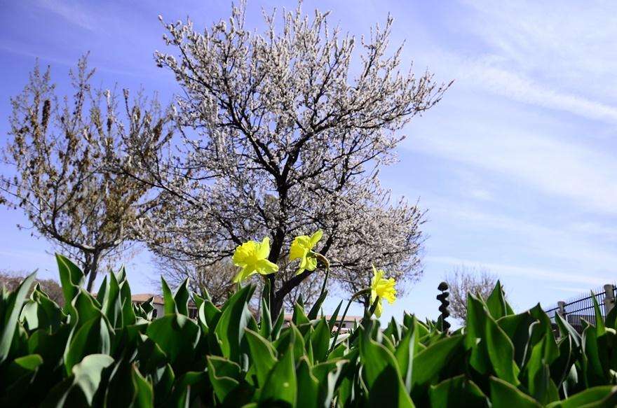 Konya'da bahar bir başka güzel 12
