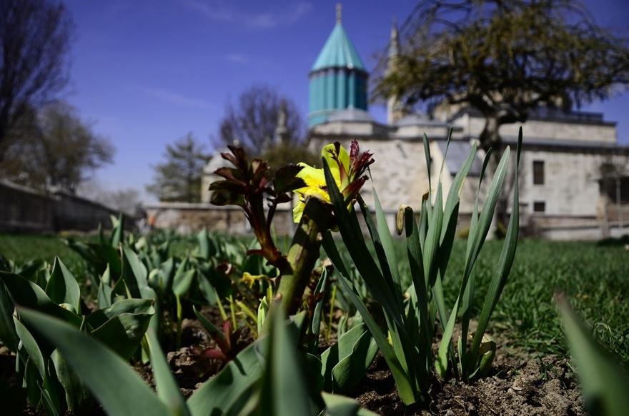 Konya'da bahar bir başka güzel 7