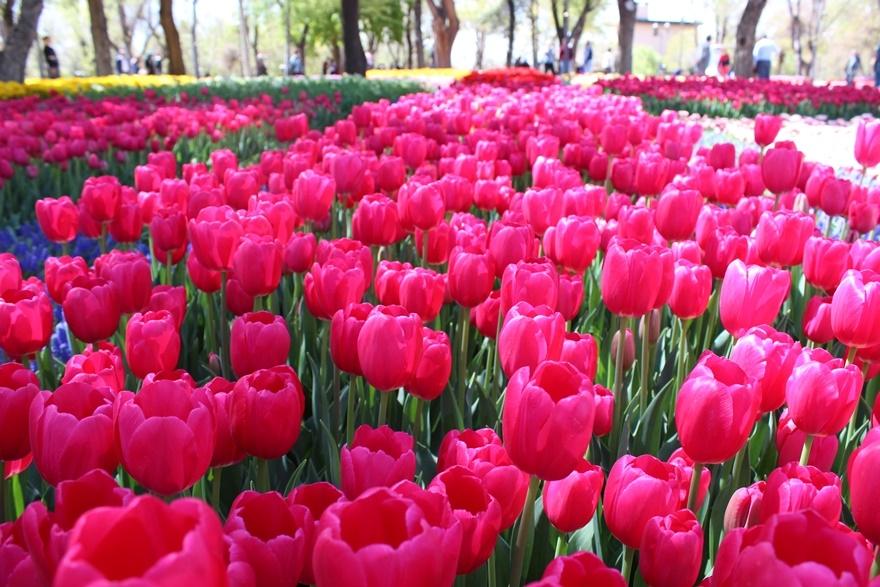 Hedef çiçek gibi Konya 14