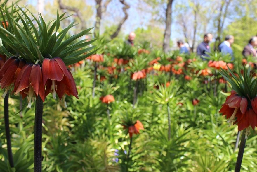 Hedef çiçek gibi Konya 24