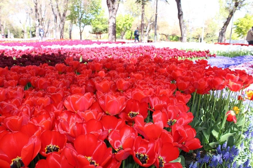 Hedef çiçek gibi Konya 8