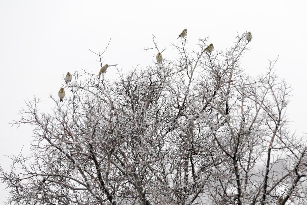 Konya'da yüksek kesimlere kar yağdı 1
