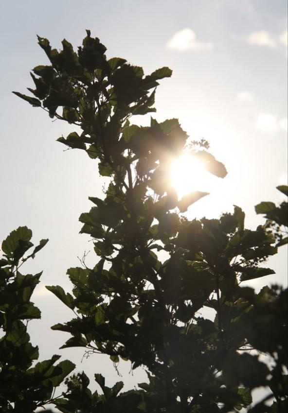 Bahar ve Günbatımı 10