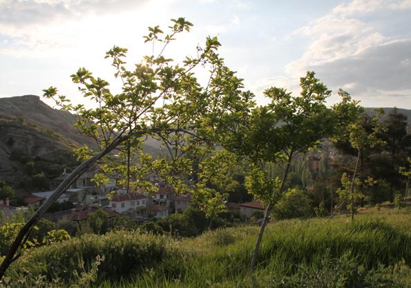 Bahar ve Günbatımı 8
