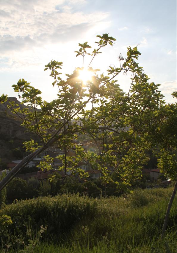 Bahar ve Günbatımı 9