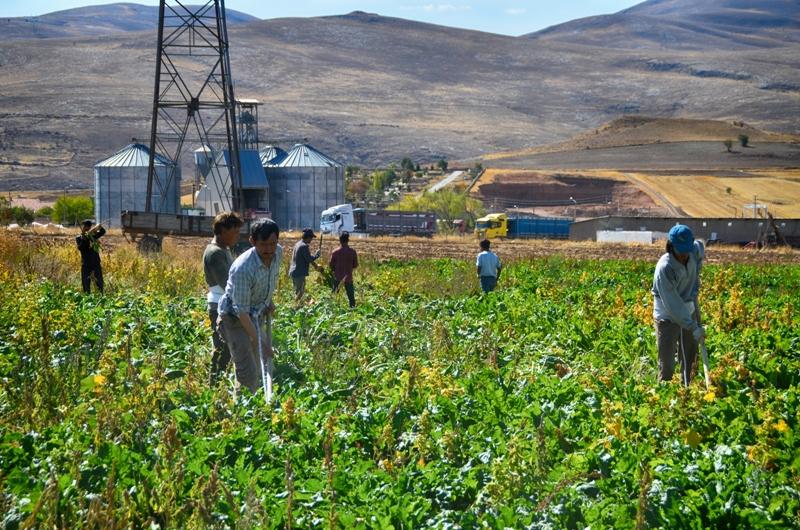Gençler tarımdan kaçıyor