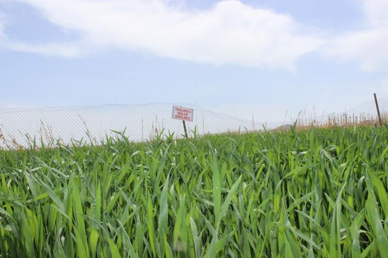 Obruk oluşan tarlalarını ekiyorlar