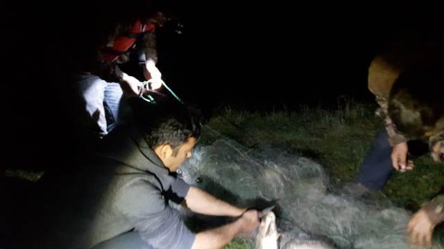 Denetimde ele geçirilen ağlardan  kurtarılan balıklar suya bırakıldı