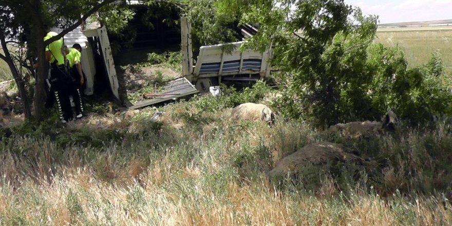 Koyun yüklü kamyonet devrildi: 2 yaralı